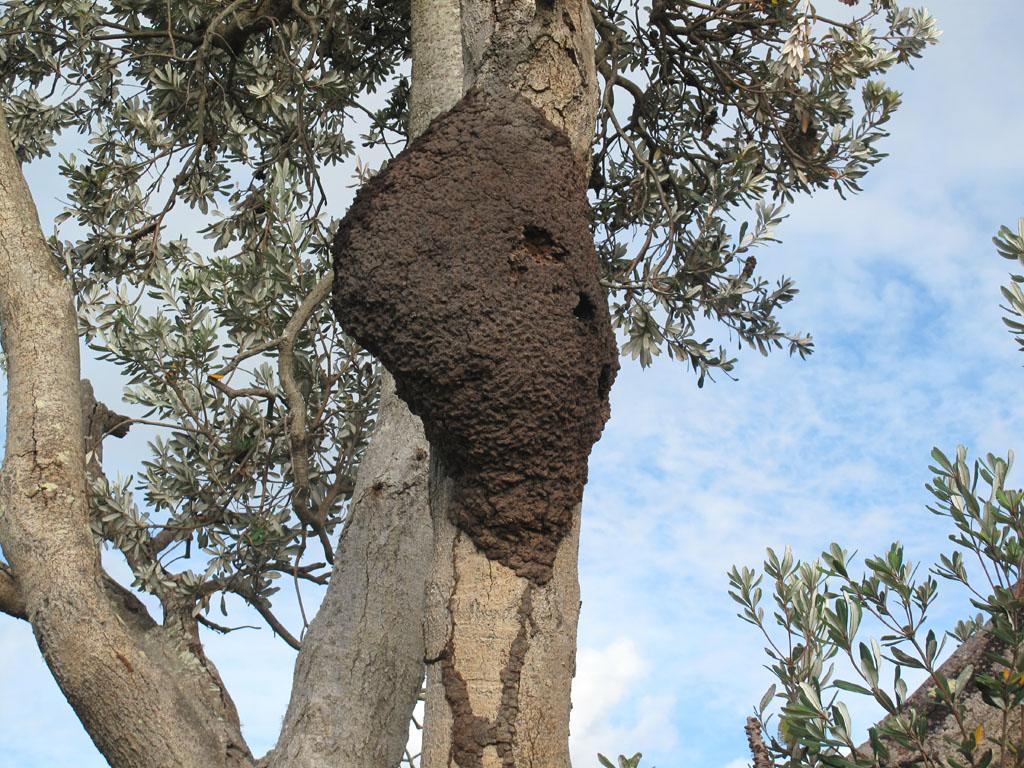 Aepma Pest Profile Subterranean Termites